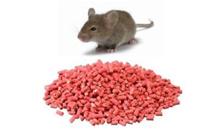 What Kind Of Rat Poison Works Best?